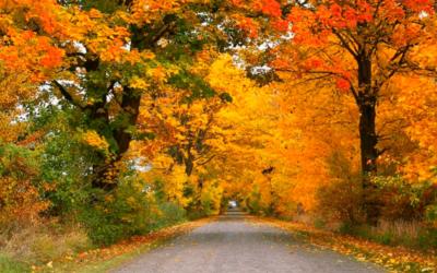Outono pede cuidados especiais com os olhos